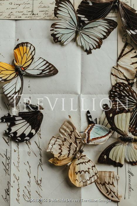 Matilda Delves Dead butterflies on letter