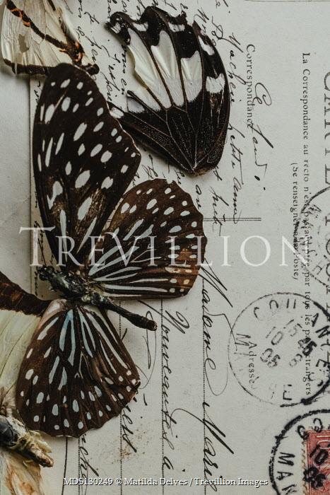 Matilda Delves Dead butterflies on postcard