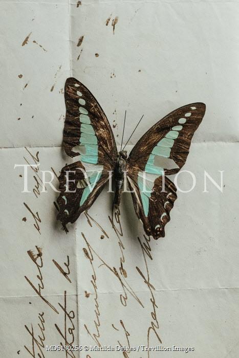 Matilda Delves Dead butterfly on letter