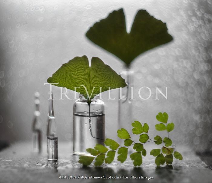 Andreeva Svoboda DELICATE GREEN LEAVES IN SMALL BOTTLES Flowers