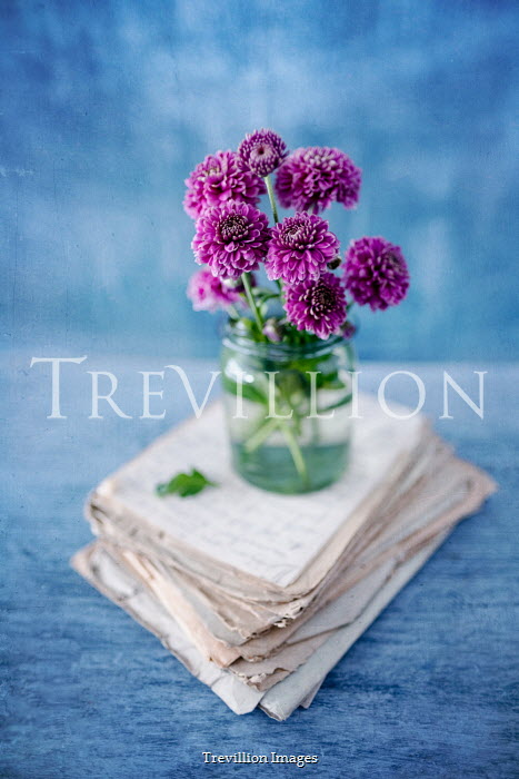 Magdalena Wasiczek PURPLE FLOWERS ON PILE OF OLD LETTERS Miscellaneous Objects