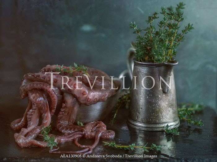 Andreeva Svoboda OCTOPUS AND PEWTER JUG WITH THYME Miscellaneous Objects