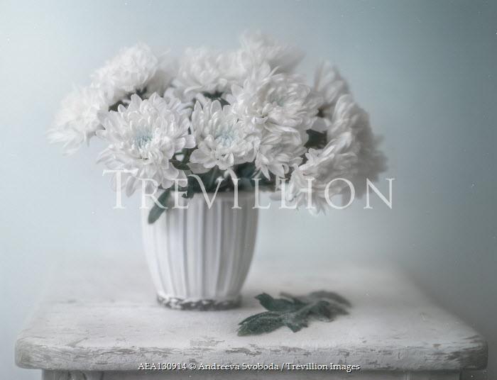 Andreeva Svoboda WHITE FLOWERS IN VASE ON TABLE Flowers