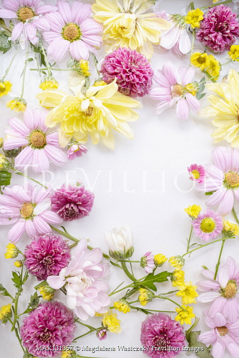 Magdalena Wasiczek PINK AND YELLOW FLOWERS LYING IN WATER Flowers