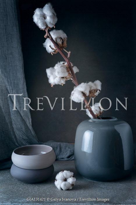 Galya Ivanova Cotton flowers in vase