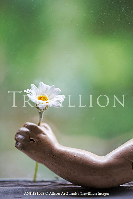 Alison Archinuk Hand of antique doll holding daisy at dirty window
