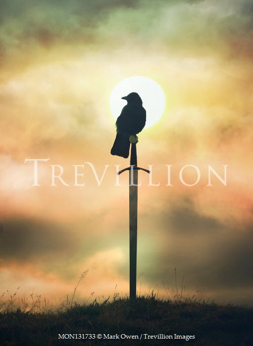 Mark Owen SILHOUETTED BIRD SITTING ON SWORD AT SUNSET Weapons