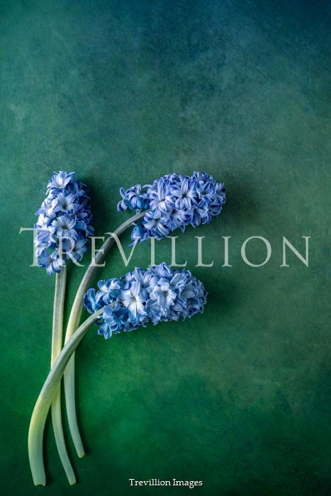 Magdalena Wasiczek BLUE FLOWERS LYING ON GREEN BACKGROUND Flowers