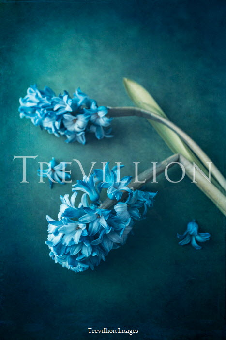 Magdalena Wasiczek DAMAGED BLUE FLOWERS Flowers