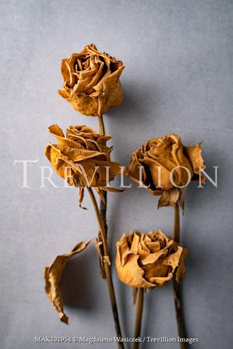 Magdalena Wasiczek DRIED YELLOW ROSES Flowers