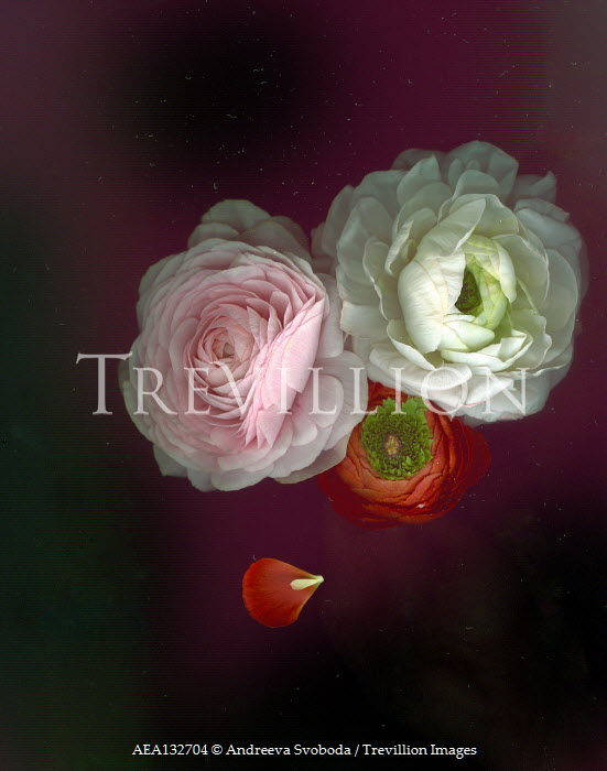 Andreeva Svoboda WHITE RED AND PINK FLOWERS FROM ABOVE Flowers