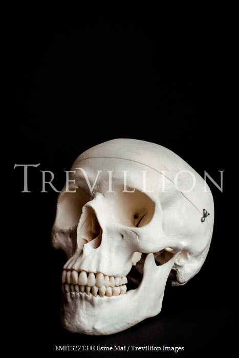 Esme Mai CLOSE UP OF HUMAN SKULL WITH TEETH Miscellaneous Objects