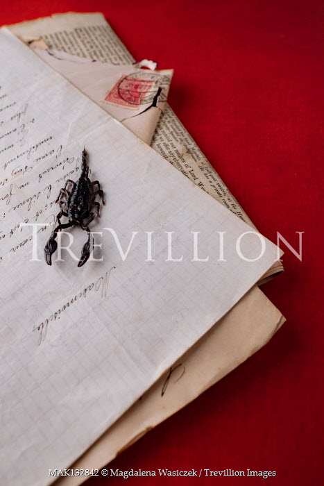 Magdalena Wasiczek SCORPION ON PILE OF OLD LETTERS Insects