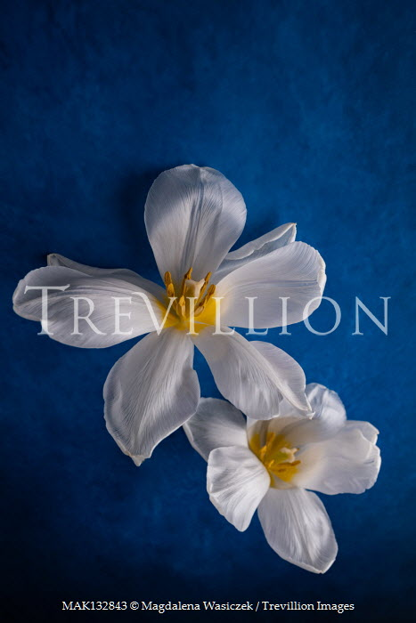 Magdalena Wasiczek WHITE AND YELLOW FLOWERS Flowers