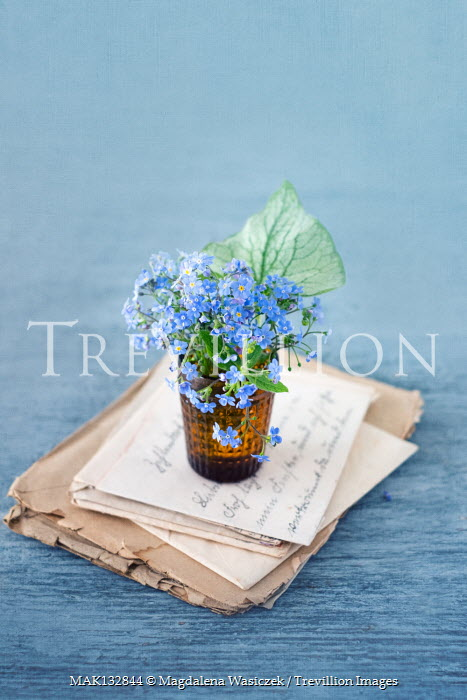 Magdalena Wasiczek FORGET-ME-NOTS ON PILE OF LETTERS Flowers
