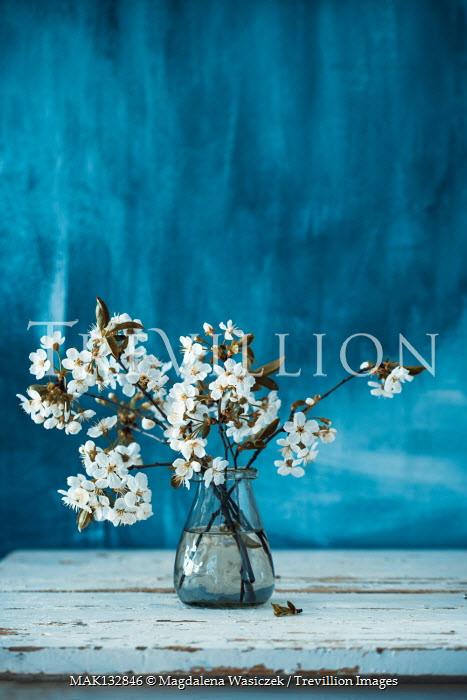 Magdalena Wasiczek WHITE BLOSSOM IN VASE ON TABLE Flowers