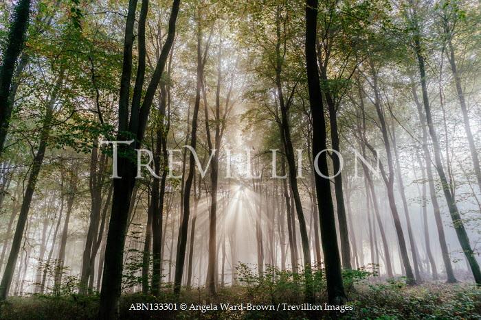 Angela Ward-Brown Sunshine in forest at sunset
