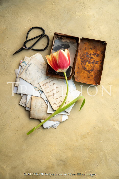 Galya Ivanova Letters and rusted tin with pink flower