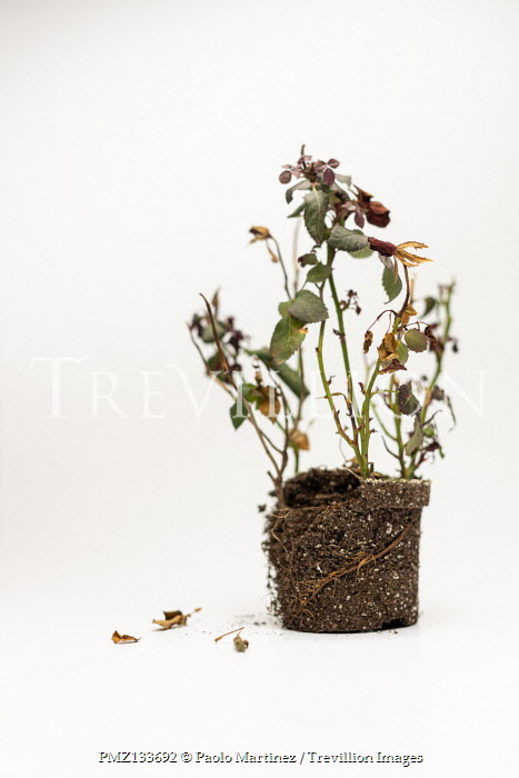Paolo Martinez WITHERED PLANT IN SOIL