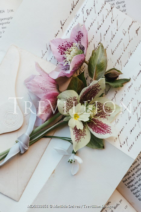 Matilda Delves PINK AND WHITE FLOWERS LYING ON LETTERS