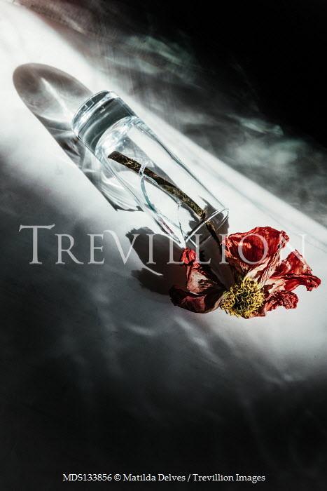 Matilda Delves DEAD FLOWER LYING IN BROKEN GLASS