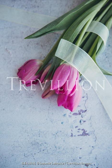 Isabelle Lafrance PINK TULIPS WRAPPED IN RIBBON