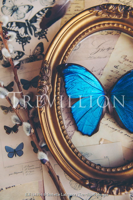 Isabelle Lafrance BUTTERFLY IN GOLD FRAME WITH ILLUSTRATIONS