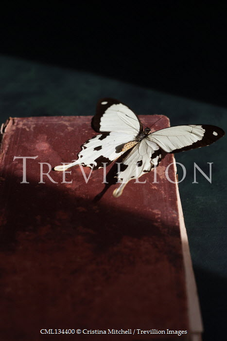 Cristina Mitchell LARGE BUTTERFLY ON OLD BOOK