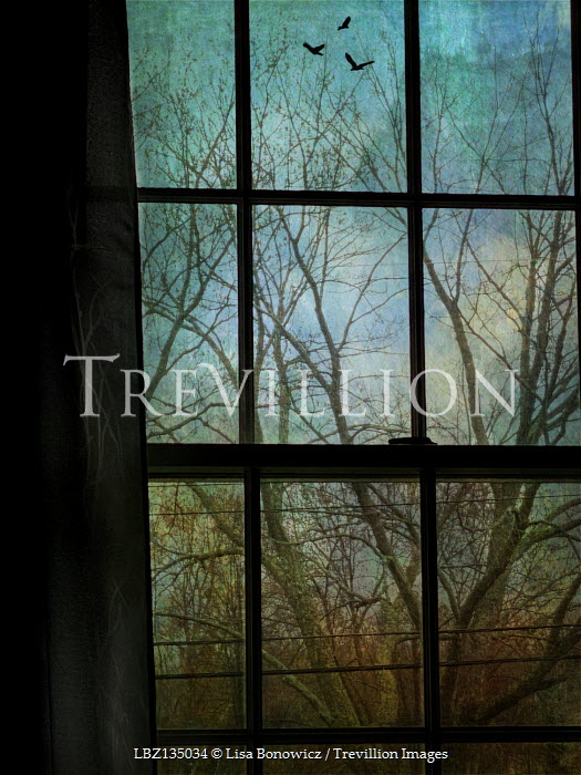Lisa Bonowicz WINDOW WITH TREE IN WINTER