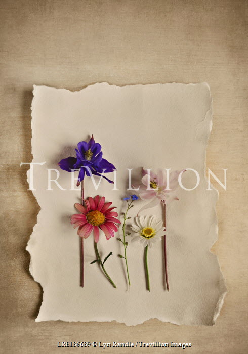 Lyn Randle COLOURFUL FLOWERS LYING ON PAPER