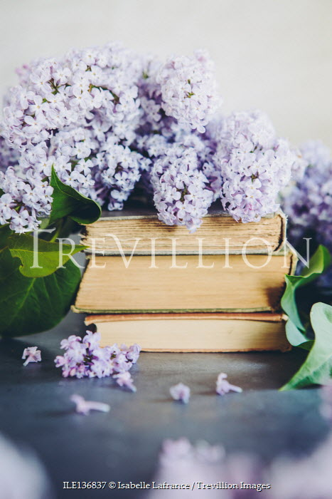 Isabelle Lafrance LILAC FLOWERS ON PILE OF BOOKS