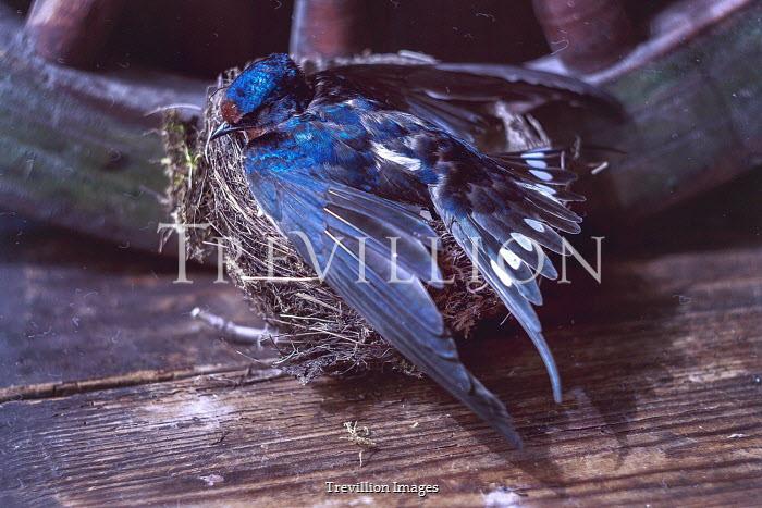 Andreeva Svoboda BLUE BIRD SITTING ON NEST BY WOODEN WHEEL