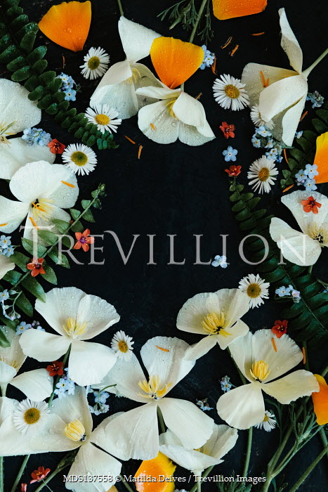 Matilda Delves COLOURFUL BORDER OF FLOWERS AND LEAVES