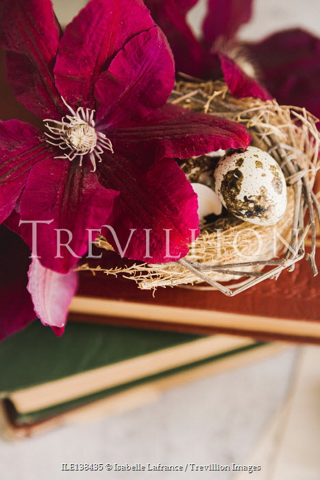 Isabelle Lafrance NEST AND EGGS WITH FLOWER AND BOOKS