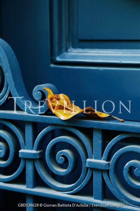 Giovan Battista D'Achille AUTUMN LEAF LYING ON BLUE GATE
