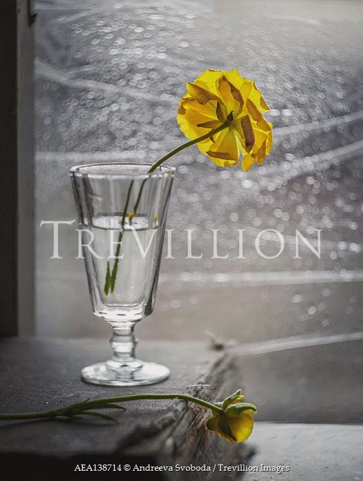 Andreeva Svoboda GLASS WITH YELLOW FLOWERS BY WINDOW