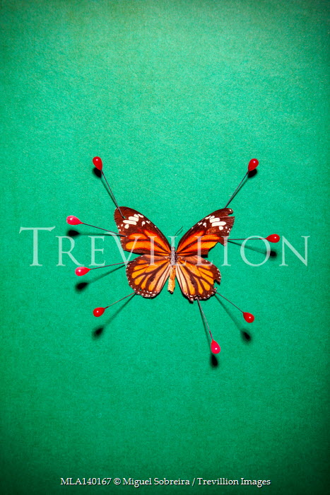 Miguel Sobreira BUTTERFLY PINNED WITH RED PINS
