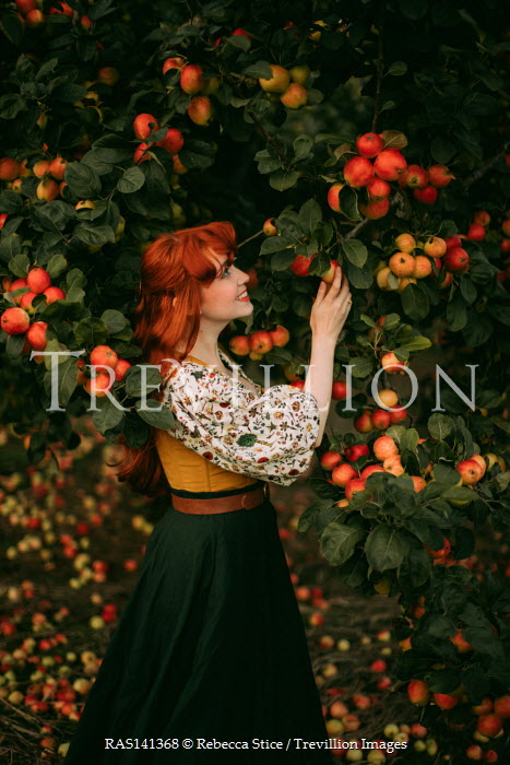 Rebecca Stice SMILING WOMAN WITH RED HAIR PICKING APPLES