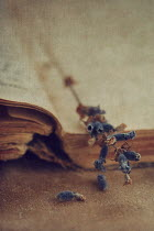 Jill Ferry DRIED FLOWERS ON AN OLD BOOK Miscellaneous Objects