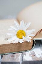 Alison Archinuk WHITE FLOWER IN BOOK