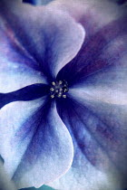 Nicole Wustrack CLOSE UP OF PURPLE FLOWER Flowers