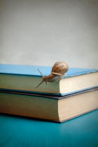 Miguel Sobreira SNAIL ON CLOSED BOOK Miscellaneous Objects