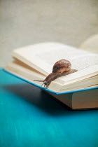 Miguel Sobreira SNAIL ON OPEN BOOK Miscellaneous Objects