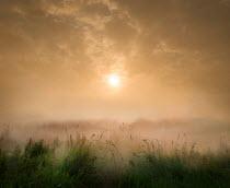 Adrian Leslie Campfield MISTY RURAL FIELD NEAR SUNSET Fields