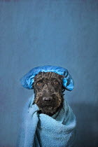 Alessandra Favetto DOG IN TOWEL AND BATH CAP Animals