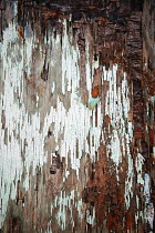 Irene Lamprakou CLOSE UP OF ROTTING WOODEN WALL Building Detail