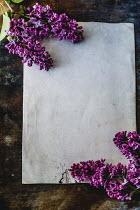 Des Panteva BLANK PAPER WITH PURPLE FLOWERS ON TABLE Flowers
