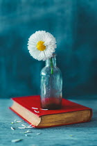 Magdalena Wasiczek FLOWER IN BOTTLE ON BOOK Flowers