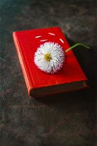 Magdalena Wasiczek WHITE AND PINK FLOWER ON RED BOOK Flowers