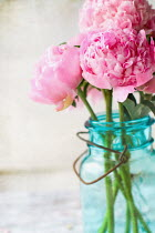 Stephanie Frey Pink Peony flowers in an a vintage blue mason jar over a white rustic wood table. Flowers